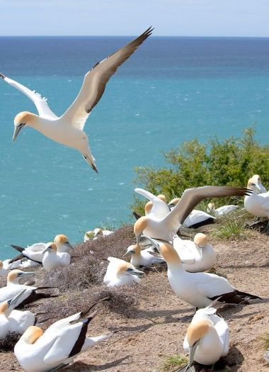 Gannet Colony Tour | Robertson Lodges