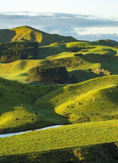 Hawkes Bay Walks | Robertson Lodges
